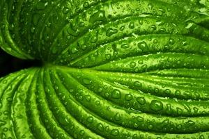 leaf-749929_1920